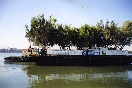 We were also responsible for the transport by barge of 90 figs trees comprising six separate trips, a 1000 kilometres down the Australian coast from the Queensland/New South Wales border to Sydney Harbour and then to their final planting spot at the Sydney Olympic site at Homebush.
