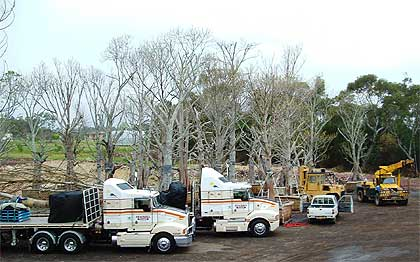 Our fleet of trucks can diliver your tree safetly