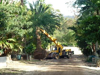 Our specialist machinery will load your tree onto our trucks.